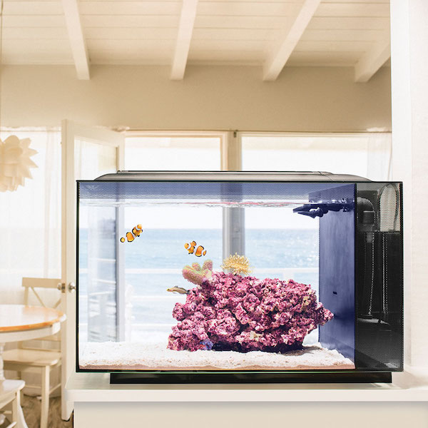 The Simple Set Up Saltwater Aquarium
