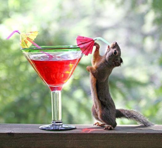 Drinking Squirrel (Image via Pixdaus)