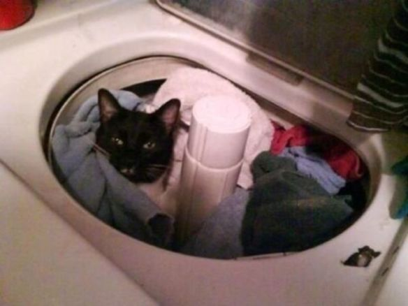Laundry Cat (Image via BlazePress)
