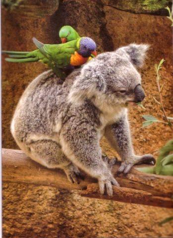 Koala Massage (Image via Postila)