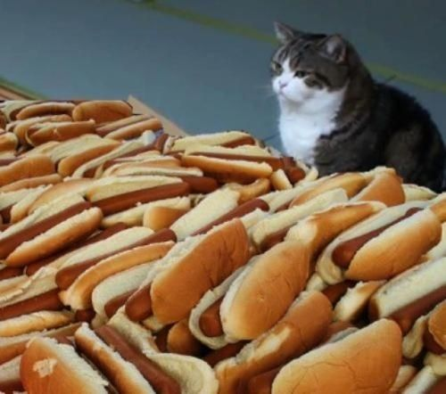 Hot Dog Cat (Image via BuzzFeed)