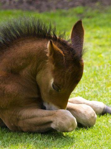 Napping Pony (Image via flickr)