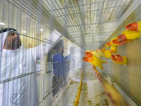 Glimpse of a bird store in the new Dubai Pet Market
