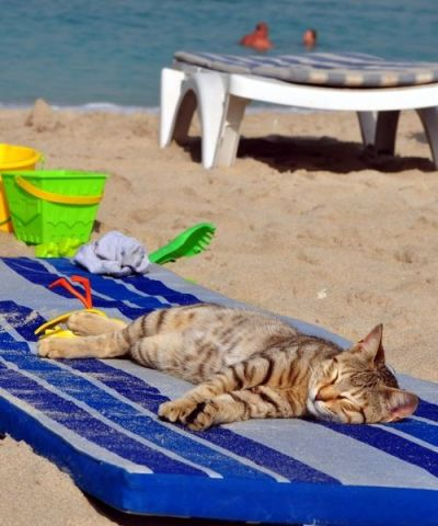 Beach Cat (Image via Pinterest)