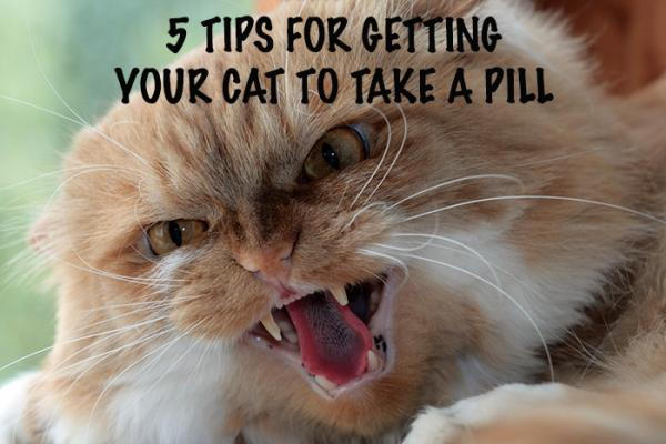 Getting Cats To Take Pills