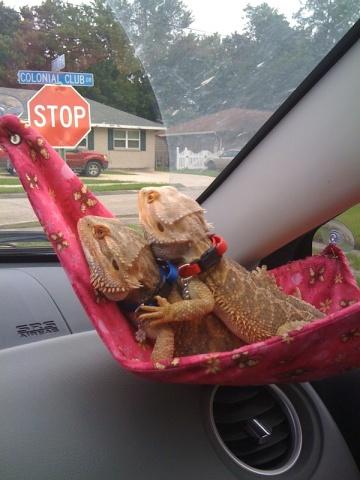 Road Trip Lizards (Image via Pinterest)