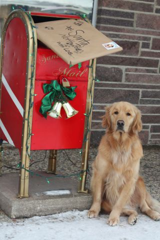 Christmas Mail Dog (Image via Pawderosa Ranch)