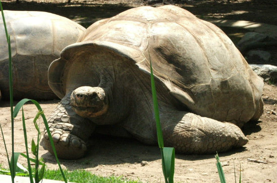 183-Year-Old Tortoise Gets New Lease on Life with Healthy Diet: Tortoises benefit from nutritional foods