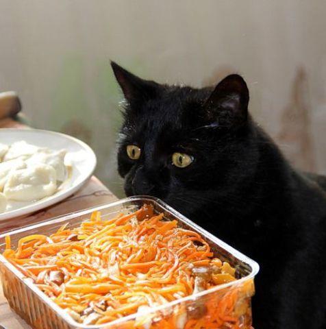 Hungry Kitty (Image via tumblr)