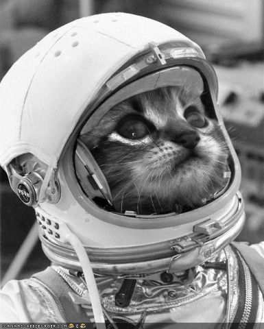 Astro-Cat (Image via tumblr)