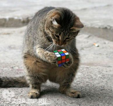 Puzzle Cat (Image via tumblr)