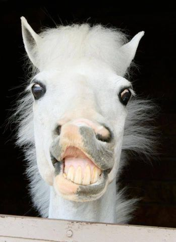 Elvis Horse (Image via googydog)