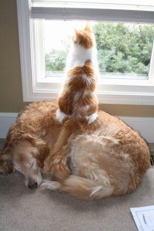 Watching Cat (Image via indulgy)