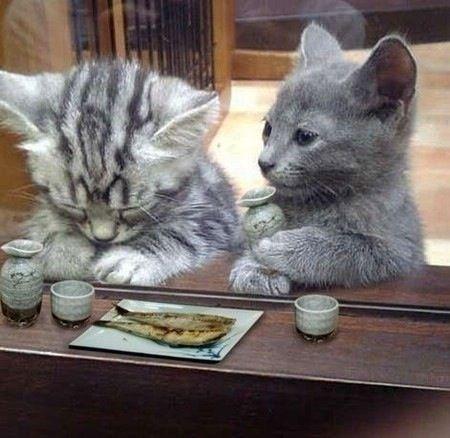 Sushi Kittens (Image via netaatoz.ja)