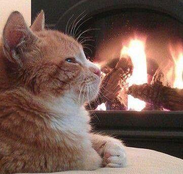 Cozy Cat (Image via dwell beautiful)