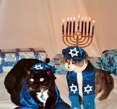 Hanukkah Cats (Image via Cat Chat)