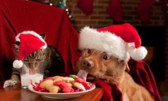 Naughty Christmas Cat and Dog (Image via Care 2)