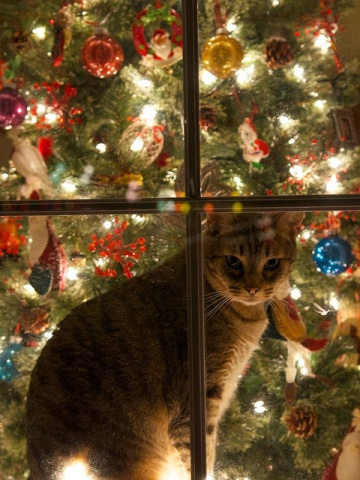 Christmas Cat (Image via flickr)