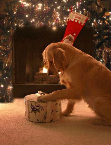 Christmas Morning Puppy (Image via tumblr)