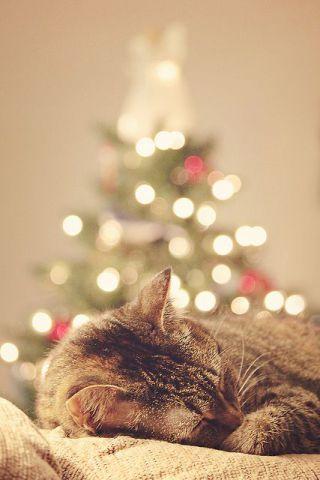Christmas Cat Nap (Image via tumblr)