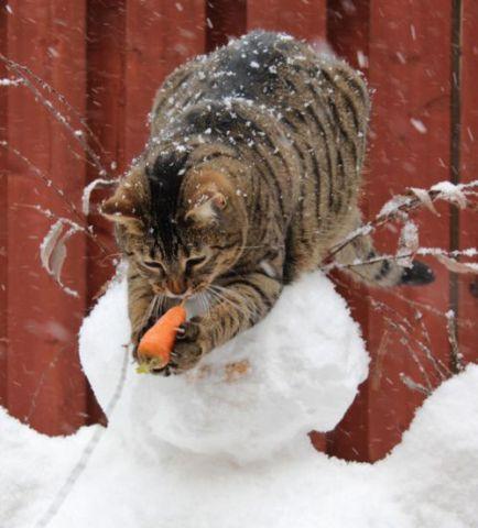 Nose Stealing Cat (Image via tumblr)