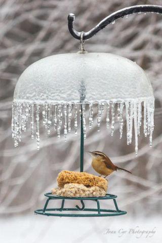 Bird Dining Al Fresco (Image via John Cyr Photograohy)