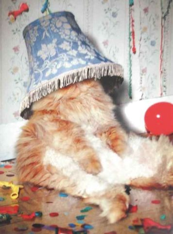 Party Cat (Image via Mad About Cats)