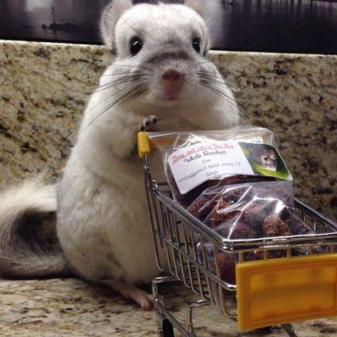 Shopping Chinchilla (Image via BuzzFeed)