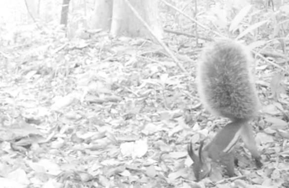 Vampire Squirrel on 2015 Video