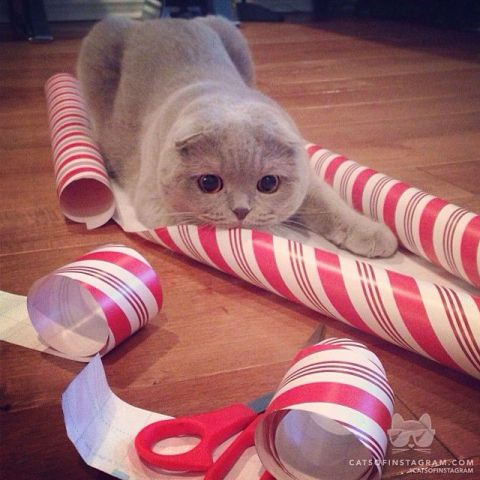 Christmas Attack Cat (Image via Cats of Instagram)