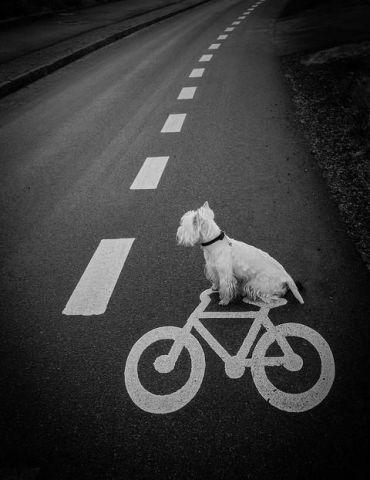 Bicycling Dog (Image via Beautiful World)