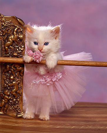 Ballet Kitten (Image via Pinterest)