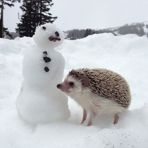Cute Hedgehog and Snowman (Image via BuzzFeed)