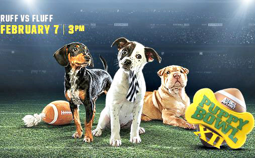 The 12th Annual Puppy Bowl is Almost Here: Puppy Bowl image via Animal Planet Facebook