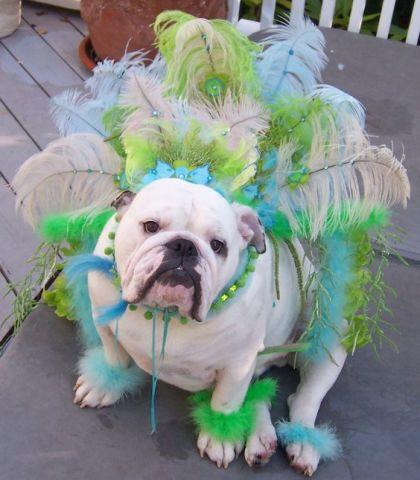 Mardi Gras Bulldog
