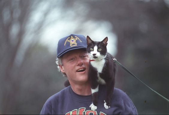 Presidential Cat