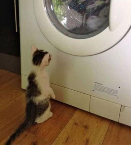 Blanket-Missing Kitty (Image via Dump a Day)