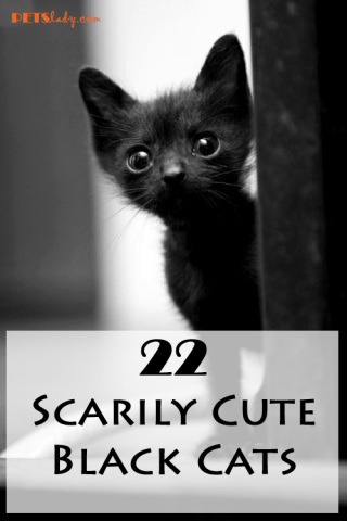 22 Scarily Cute Black Cats That Will Put A Spell On You Petslady Com