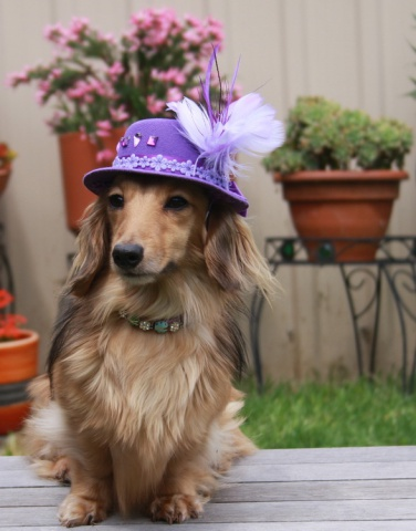 Easter Bonnet Dog (Image via Dogster)