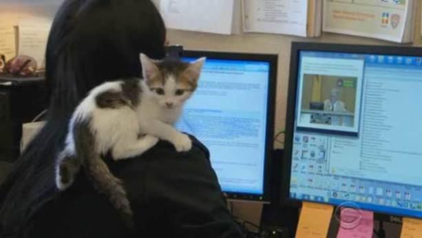 Kitten with County Employee (YouTube Image)