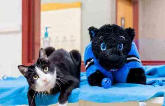 Kylie the SPCA Cat