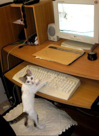 Computer Felines (Image via tumblr)