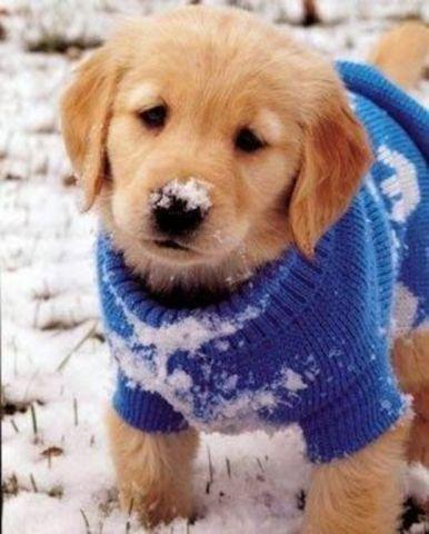 Snow Dog (Image via A Dog Fashion)