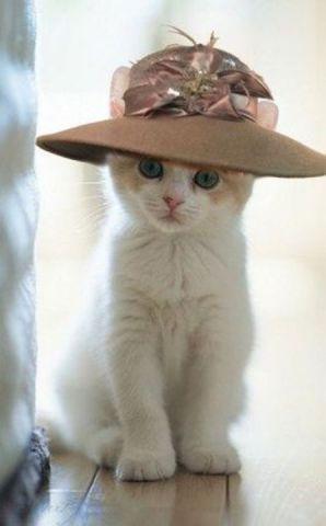 Cat in the Hat (Image via tumblr)