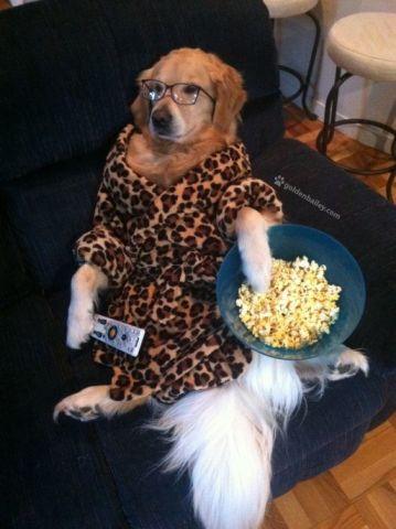 Binge-Watching Dog