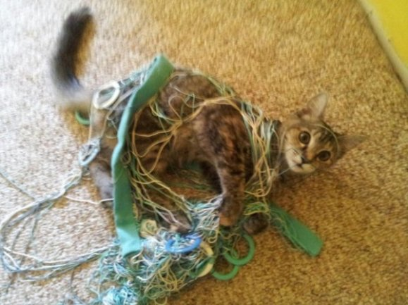 Yarn Cat (Image via the CHIVE)