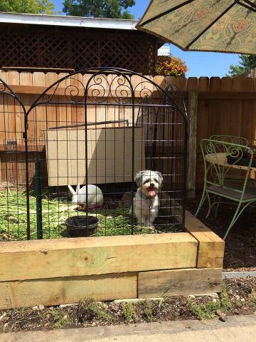 Penned Puppy (Image via Isabel Sanchez)