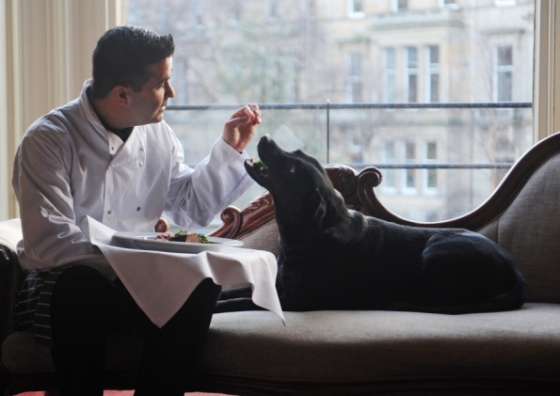 Lab served breakfast at Bonham Hotel: Image: Dan Phillips via scotsman.com