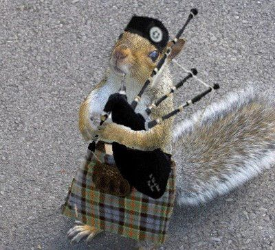 Piping Squirrel