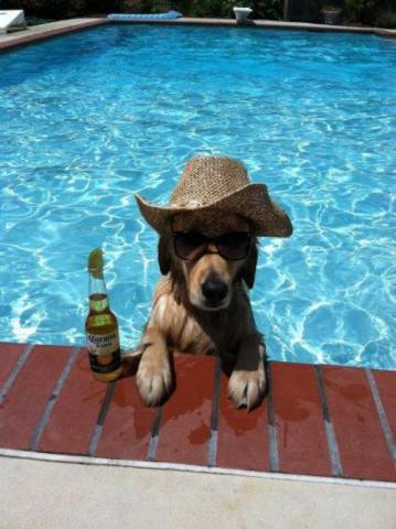 Pool Dog (Image via the CHIVE)